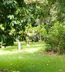 Kingfisher Park Birdwatchers Lodge - Accommodation Rockhampton