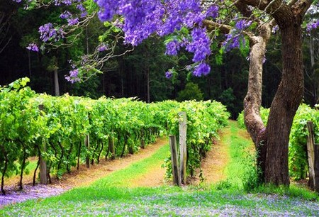 Bago Vineyards - Accommodation Rockhampton