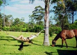 Neds Bed Horse O Tel - Accommodation Rockhampton