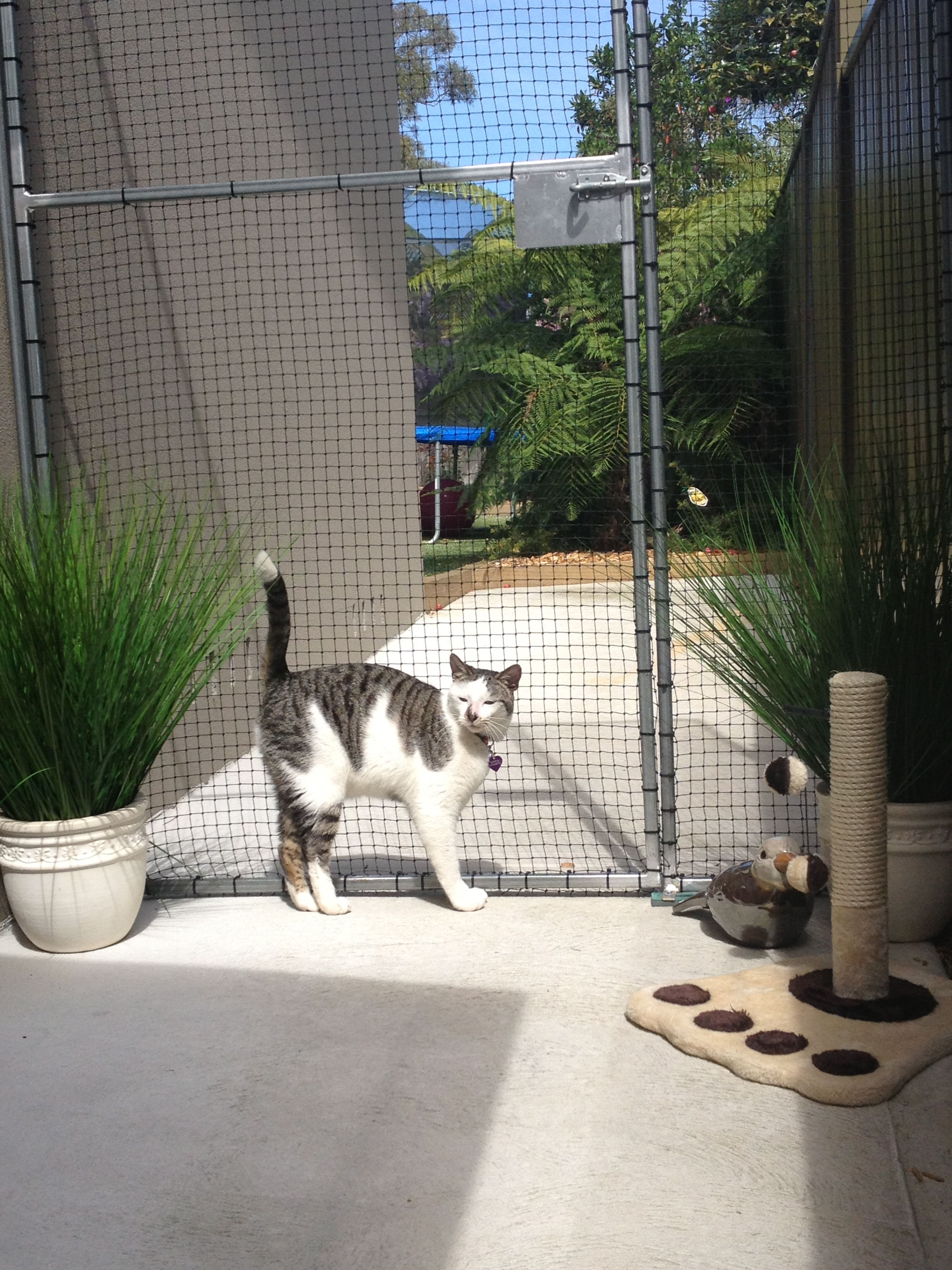 Caringbah Cat Hotel - Accommodation Rockhampton