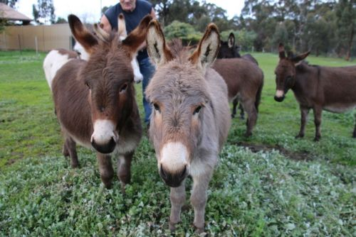 Donkey Tales Farm Cottages - Accommodation Rockhampton