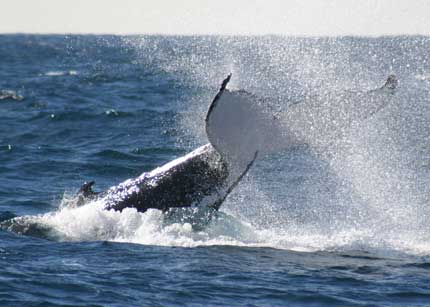 Whale Watching Sydney - Accommodation Rockhampton