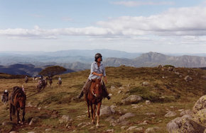 High Country Horses - Accommodation Rockhampton