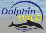 Dolphin Wild - Accommodation Rockhampton