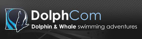 Dolphcom - Dolphin  Whale Swimming Adventures - Accommodation Rockhampton