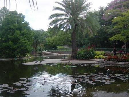 Brisbane City Botanic Gardens - Accommodation Rockhampton