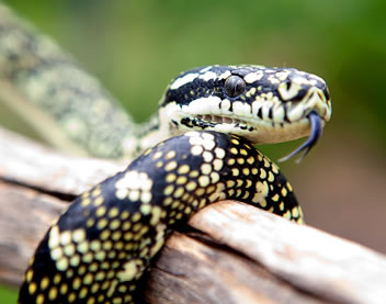 Reptile Encounters - Accommodation Rockhampton