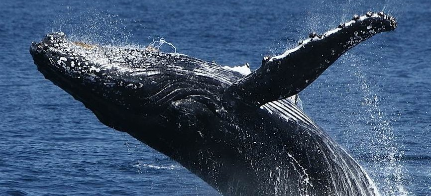 Spirit Of Gold Coast Whale Watching - Accommodation Rockhampton