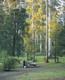 Big Brook Arboretum - Accommodation Rockhampton