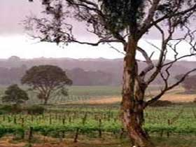 Yangarra Estate Vineyard - Accommodation Rockhampton