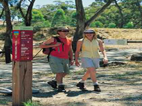 Riesling Trail - Accommodation Rockhampton