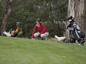 Tasmania Golf Club - The - Accommodation Rockhampton