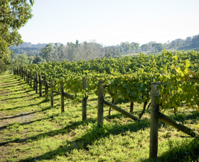 Surveyor's Hill Vineyards - Accommodation Rockhampton