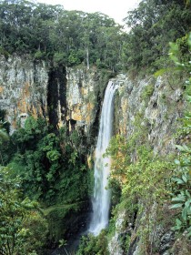 Gondwana Rainforests of Australia - Accommodation Rockhampton