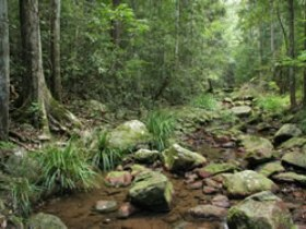Amamoor State Forest - Accommodation Rockhampton