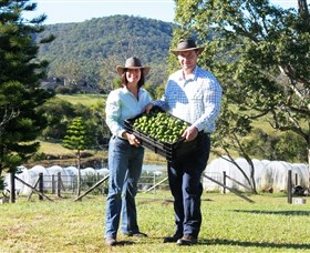 Hinterland Feijoas - Accommodation Rockhampton