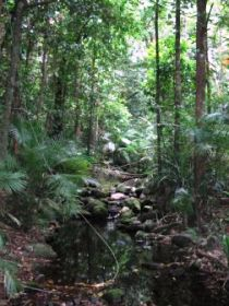Mossman Gorge Rainforest Circuit Track Daintree National Park - Accommodation Rockhampton