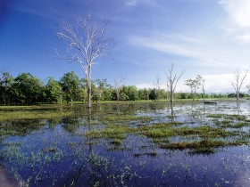 Tyto Wetlands - Accommodation Rockhampton