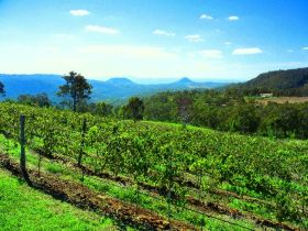 Preston Peak Wines - Accommodation Rockhampton