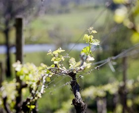 Elan Vineyard and Winery - Accommodation Rockhampton