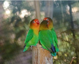 Ballarat Bird World - Accommodation Rockhampton