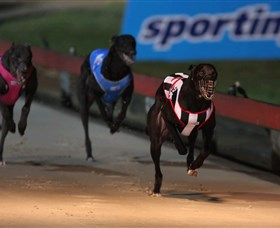Dapto Dogs - Accommodation Rockhampton