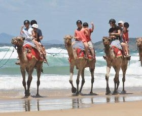 Camel Rides with Coffs Coast Camels - Accommodation Rockhampton