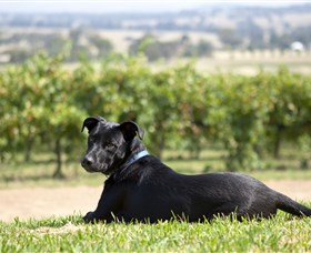 Moothi Estate Vineyard and Cellar Door - Accommodation Rockhampton