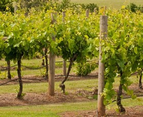 Mt Coghill Vineyard - Accommodation Rockhampton