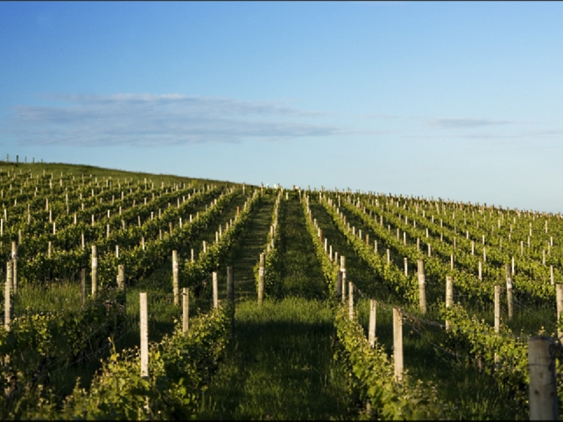 Delamere Vineyard - Accommodation Rockhampton