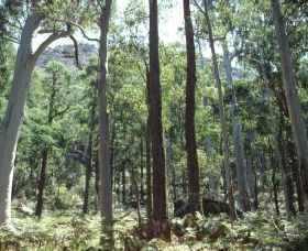 Cathedral Range State Park - Accommodation Rockhampton