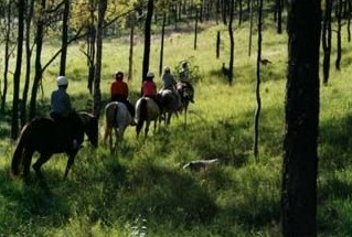 Hunter Valley Horse Riding and Adventures - Accommodation Rockhampton