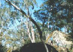 Dergholm State Park - Accommodation Rockhampton