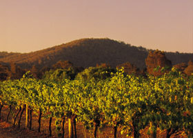 Taltarni Vineyards - Accommodation Rockhampton