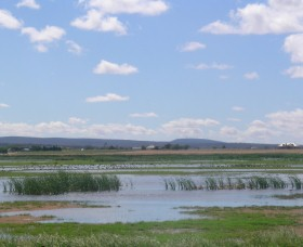 Fivebough Wetlands - Accommodation Rockhampton