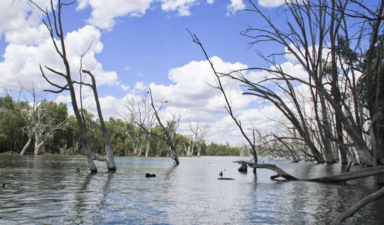 Murrumbidgee Valley National Park - Accommodation Rockhampton