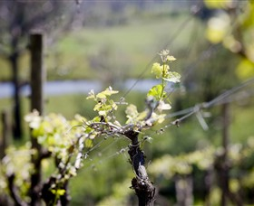 Mountainside Wines - Accommodation Rockhampton