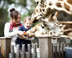 Taronga Western Plains Zoo Dubbo - Accommodation Rockhampton