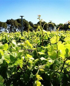 Basalt Wines - Accommodation Rockhampton