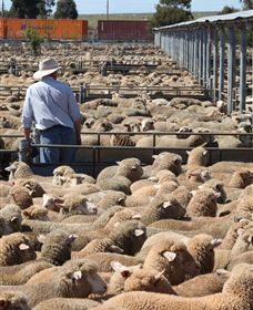 Livestock Marketing Centre - Accommodation Rockhampton