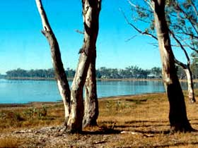 Lake Broadwater Conservation Park - Accommodation Rockhampton