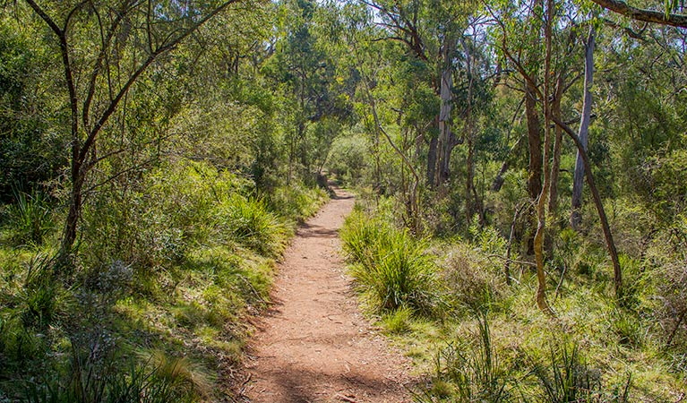 Mares Forest Creek walking track - Accommodation Rockhampton