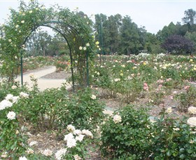 Victoria Park Rose Garden - Accommodation Rockhampton