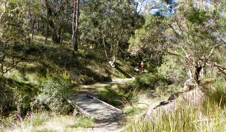 Wollomombi walking track - Accommodation Rockhampton