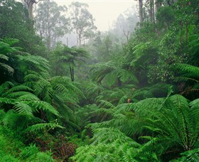 Tarra Bulga National Park - Accommodation Rockhampton