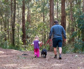 Olney State Forest - Watagan Mountains - Accommodation Rockhampton