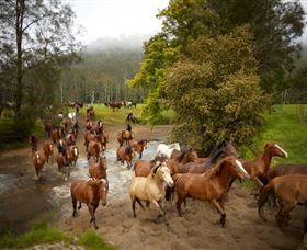 Glenworth Valley Horse Riding - Accommodation Rockhampton
