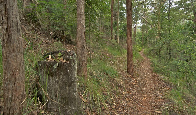 Border loop walk - Accommodation Rockhampton