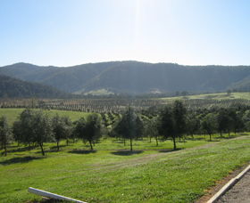 Hastings Valley Olives - Accommodation Rockhampton