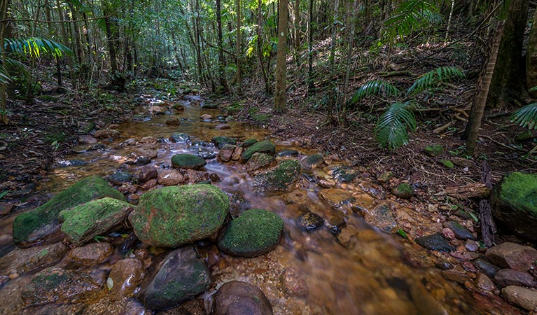 Starrs Creek picnic area - Accommodation Rockhampton